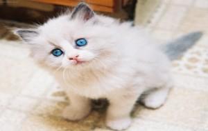 Gatos- Cuide Bem deles