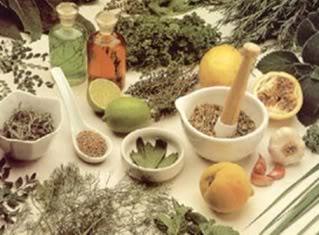 plantas medicinais- sus - fitotrapia