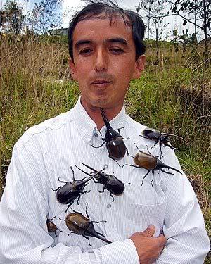 Besouros Gigantes