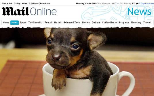 Menor cão do mundo