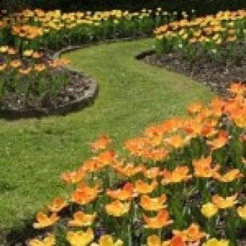 Jardinagem e Paisagismo com Fotos__