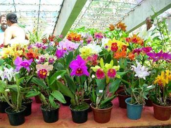 Cuidado de Orquídeas