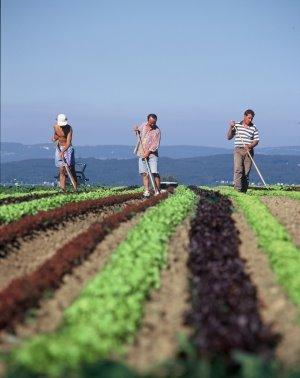 Cursos Gratuitos de Hotelaria e Agricultura Cursos em Caçapava 2010