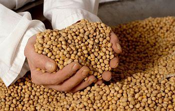Proteina de Soja Onde Comprar Proteína de Soja, Onde Comprar