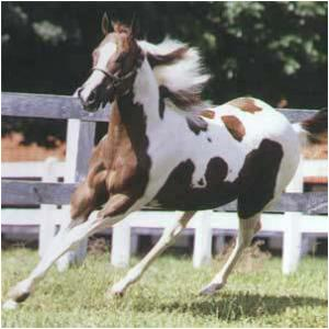 Curso de adestramento de cavalos