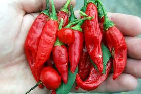 os-benefícios-da-pimenta-vermelha